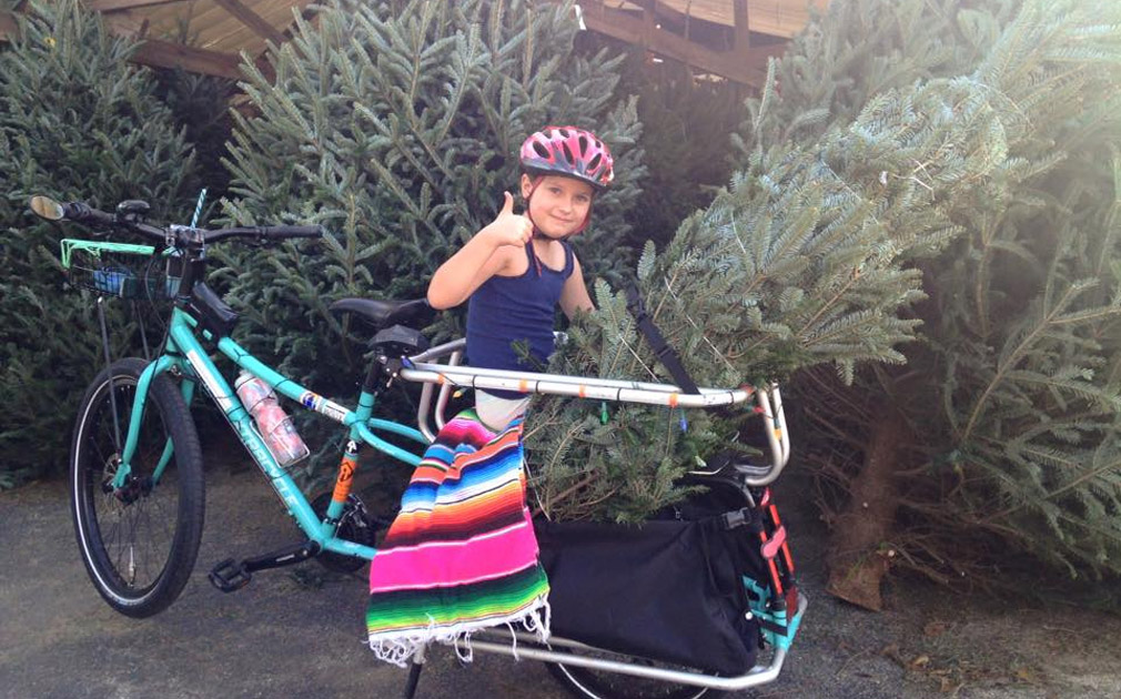 Carrying Christmas tree by cargo bike