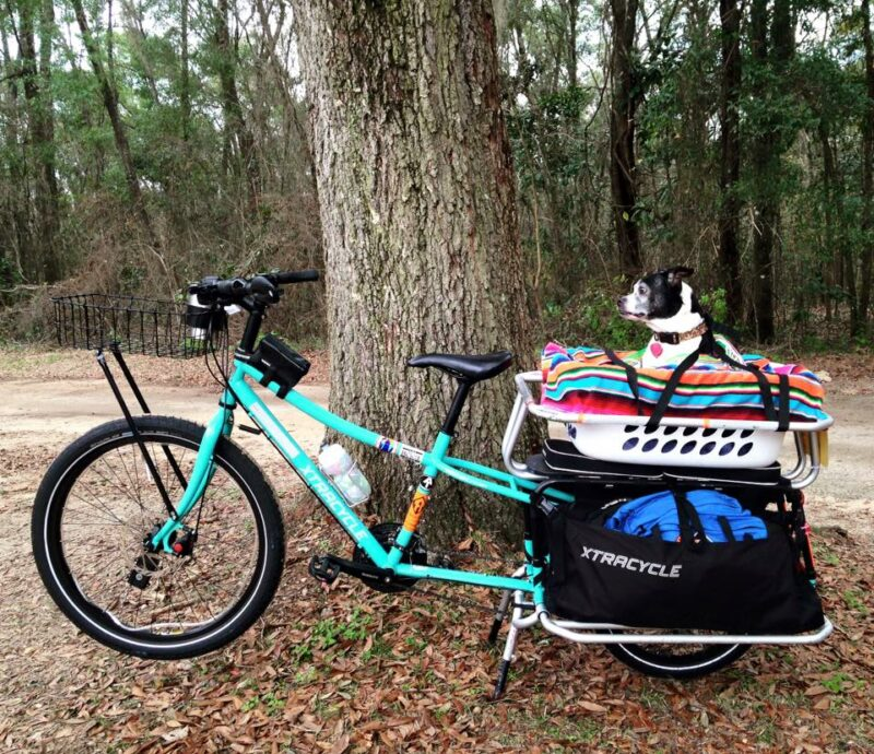 dog on an Xtracycle cargo bike